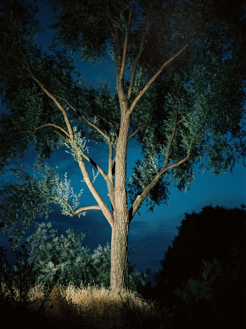 night_birds_paloma_pineda_03